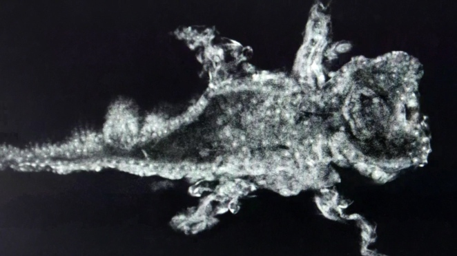 Focal plane slice through a frog using Aurox 3D microscope imaging