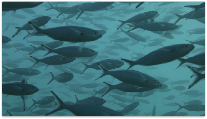 Environmental data can be used to monitor ocean life.