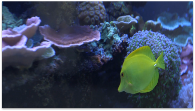 Marine life is very sensitive to changes in the environment.