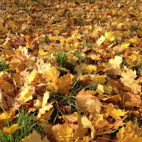leaves-5747