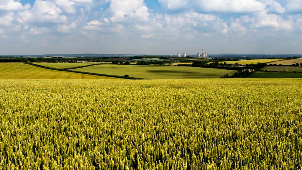 Didcot power station seen across a field of golden wheat